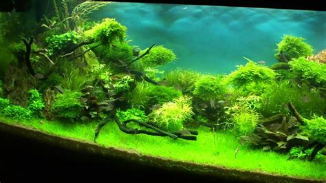 Aquascaping World by Aquascape Quot Forgotten World 2 Quot