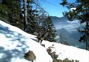Das Stahlhaus Gmbh : 84 best nationalpark berchtesgaden images on pinterest germany bavaria and deutsch ~ Indierocktalk.com Haus und Dekorationen