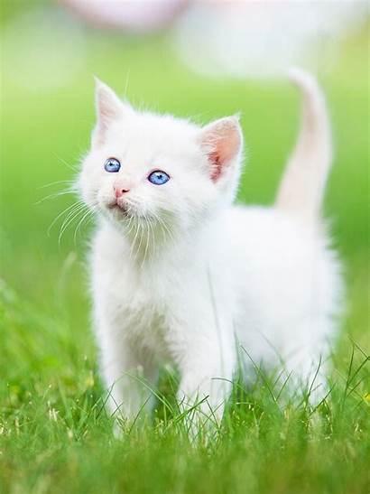 Kitten Persian Cat Wallpapers Stitch Sad Grass