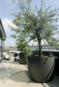 Comment Remplir Une Grande Jardinière : olivier en pot pour la terrasse ou le balcon conseils et photos id es pour la maison pinterest ~ Melissatoandfro.com Idées de Décoration