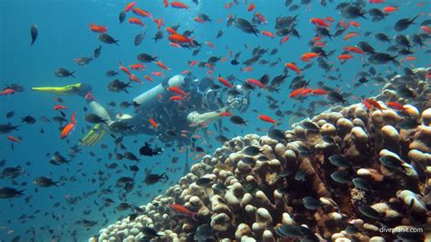 Dive Sipadan by Turtle Patch Sipadan Diving Borneo Malaysia
