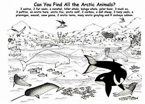 polar animal coloring pages - arctic tern coloring download arctic tern coloring
