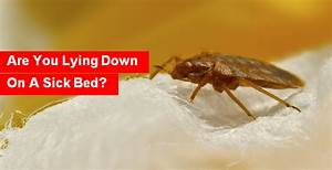are you lying down on a sick bed With bed bugs ireland