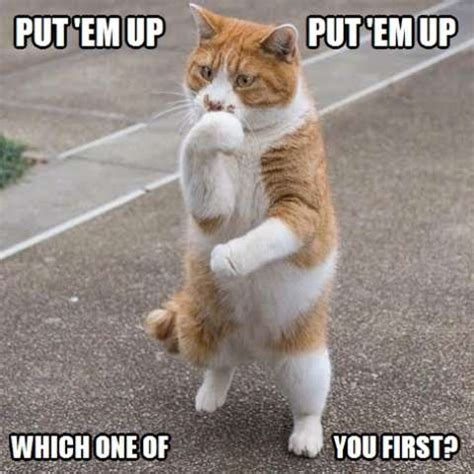 Majestic Cats  A collection of cute and funny cat photos