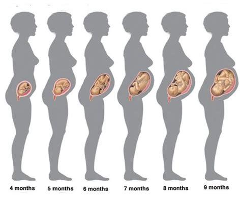 33 - a 33 -a saptamana de sarcina, sarcina pe saptamani