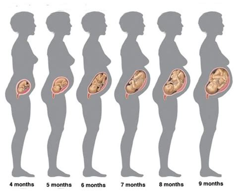 Cytotec 3 Bulan Are You Attentive Towards The Stages Of Pregnancy