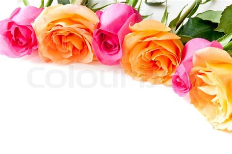 Border Of Beautiful Orange And Pink Roses On Light