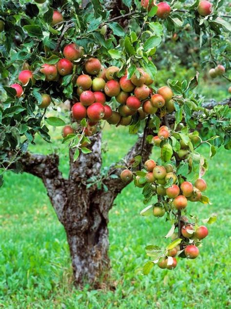 25+ Best Ideas About Planting Fruit Trees On Pinterest