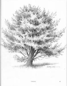 Forest Sketches - Drawing Nature - Joshua Nava Arts