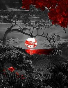 Black And White Photography With Red Color | www.pixshark ...