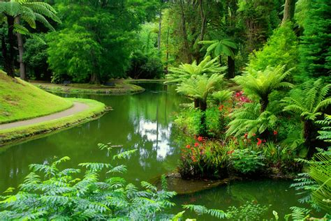 green forest wallpaper green forest forests serenity lake summer Beautiful
