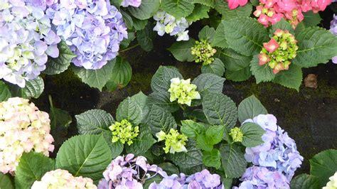 fiori per il giardino quali fiori da giardino scegliere e quali sono i prezzi