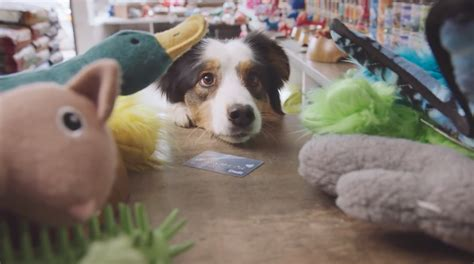 canadian banking ad asks   dogs    debit