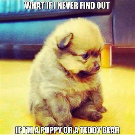 pin  maria es  mans  friend funny puppy memes