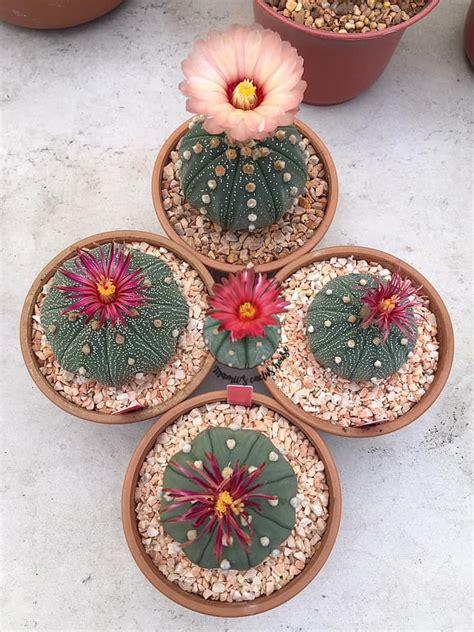 Mamii's cactus house บ้านแคคตัสคุณแม่ - Posts | Facebook
