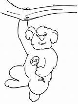 Koala Coloring Pages Funny Hanging Tree Printable Bear Cute Drawing Koalas Outline Animals Animal Climbing Print Getdrawings Supercoloring Bestcoloringpagesforkids Colors sketch template