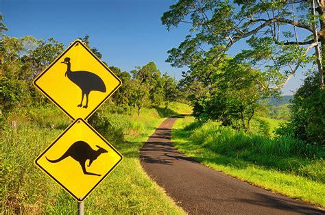 unique wildlife  australia   zealand goway