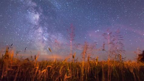 Tree On Green Meadow And Starry Sky With Falling Star