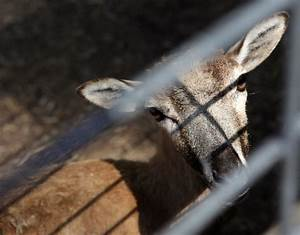 Deer Forest Fun Park auction: More than deer being sold ...
