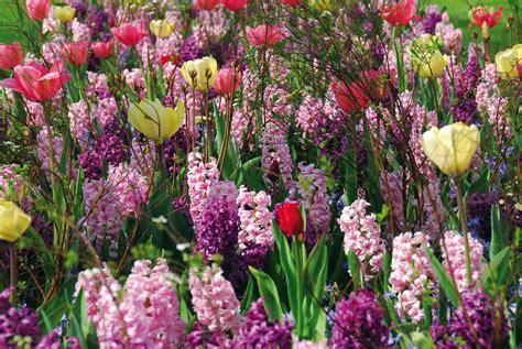 flower to bloom flower bulbs enjoy the glorious bulb flowers that bloom in spring grdn network
