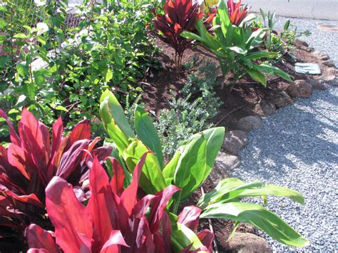 best plants for xeriscaping xeriscape board of water supply