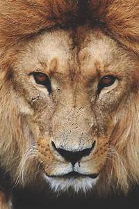 Lion's Kingdom