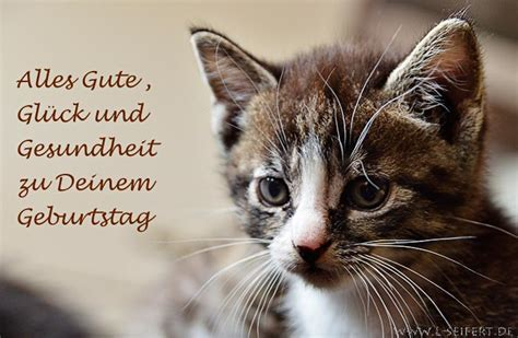 greeting card  kitten  happy birthday health