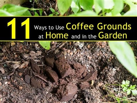 Ferringhi coffee garden offers tasty food with unbeatable garden ambience. 11 Ways to Use Coffee Grounds in the Garden