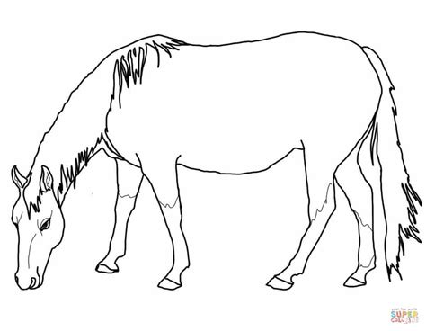 horses to color palomino coloring pages and print for free