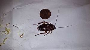 roach in bathroom sink find and save wallpapers With how to get rid of water bugs in bathroom