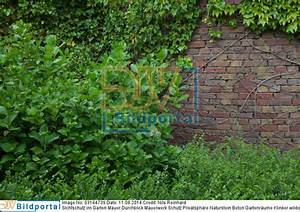 Sichtschutz Mauer Naturstein : details zu 0003184739 sichtschutz im garten mauer durchblick mauerwerk schutz privatsph re ~ Sanjose-hotels-ca.com Haus und Dekorationen