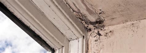 signs  damp expert advice rentokil property care