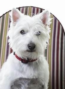 leuke kleine witte hond stock foto afbeelding bestaande