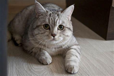 YouTube Sneaky Cat