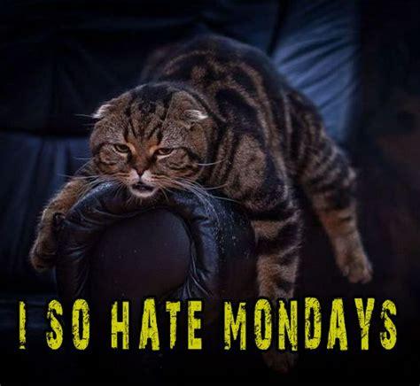 I Hate Mondays Meme - cat meme i hate mondays funny pictures random humor epic fails worst family photos bad family