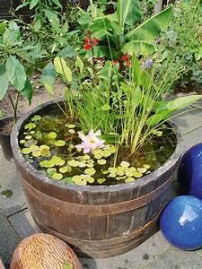 Zinkwanne Miniteich Springbrunnen : teich im fass wasser im garten teich ~ Whattoseeinmadrid.com Haus und Dekorationen