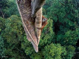 The breathtaking winners of the Wildlife Photographer of the Year - Business Insider