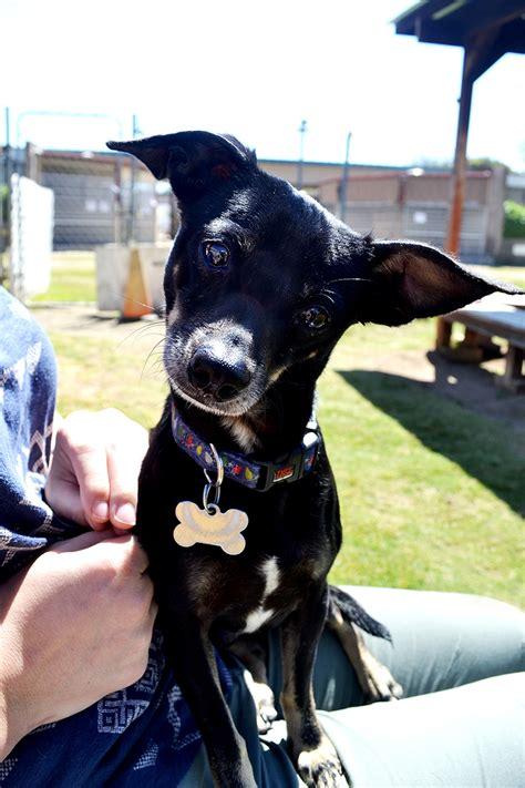 dogs  puppies  adoption  san diego helen