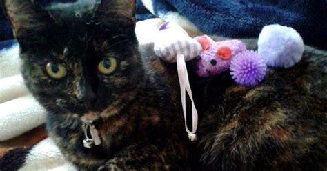 net closes  croydon cat killer  hopes