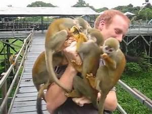Never peel bananas near monkeys! - YouTube