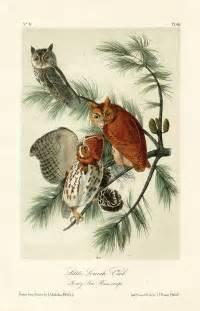 Audubon Prints Birds of America