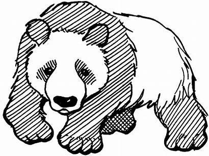Panda Coloring Pages Bear Printable Giant Adults