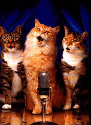 singing cats singing cats animated gif 4494 animate it