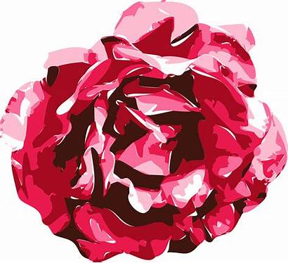 Rose Vector Graphics Drawing Graphic Draw Drawings