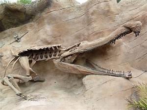 Image Gallery sarcosuchus imperator
