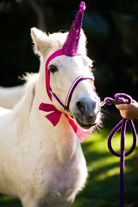 maddycakes muse unicorn party hats