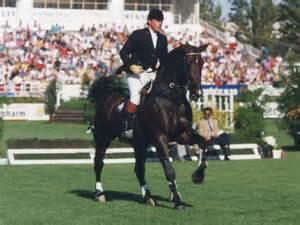 Darco Stallion