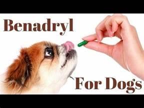 Benadryl Weight Chart Benadryl Dosage For Dogs Chart Youtube