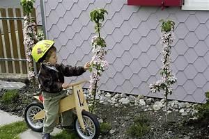Mini Obstbäume Für Den Garten : ein obstbaum f r den kleinen garten reiche ernte auch bei wenig platz ~ Heinz-duthel.com Haus und Dekorationen