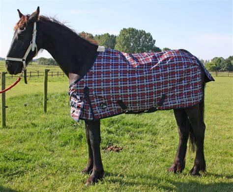 Luba Pferdedecken, Mini Pferde® All Wetter Luba014 Pony